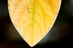 μέγεθος φύλλων εικόνας φθινοπώρου xxxl Κινηματογράφηση σε πρώτο πλάνο Στοκ εικόνα με δικαίωμα ελεύθερης χρήσης