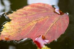 μέγεθος φύλλων εικόνας φθινοπώρου xxxl Στοκ Εικόνες