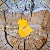 μέγεθος φύλλων εικόνας φθινοπώρου xxxl Στοκ Φωτογραφίες