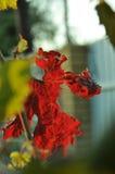 μέγεθος φύλλων εικόνας φθινοπώρου xxxl Στοκ εικόνα με δικαίωμα ελεύθερης χρήσης
