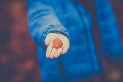 μέγεθος φύλλων εικόνας φθινοπώρου xxxl στοκ φωτογραφία