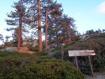 Μέγιστα δέντρα οδικών πεύκων Keller στο σούρουπο στοκ εικόνες με δικαίωμα ελεύθερης χρήσης