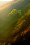 Μέγιστο εθνικό πάρκο Egland περιοχής Στοκ Φωτογραφία