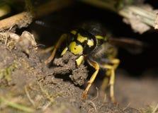 μέλισσα χωμάτινη Στοκ εικόνες με δικαίωμα ελεύθερης χρήσης