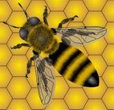 μέλισσα Στοκ Φωτογραφία
