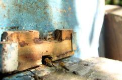 μέλισσα 4 Στοκ Εικόνα
