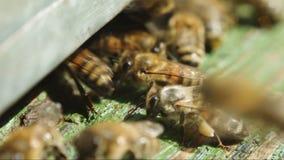 Μέλισσες κοντά σε μια κινηματογράφηση σε πρώτο πλάνο κυψελών απόθεμα βίντεο