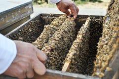 μέλισσες κυψελών στοκ εικόνα με δικαίωμα ελεύθερης χρήσης