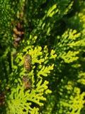 Μέλισσες που είναι μέλισσες γύρω από τα δέντρα στοκ φωτογραφία με δικαίωμα ελεύθερης χρήσης