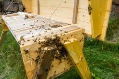 Μέλισσες που παίρνουν έτοιμες να συρρεύσει σε μια τοπ κυψέλη φραγμών στοκ φωτογραφία