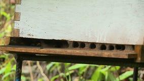 Μέλισσες σε ένα εσωκλειόμενο διάστημα απόθεμα βίντεο