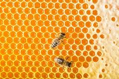 Μέλισσες στις κηρήθρες Στοκ φωτογραφία με δικαίωμα ελεύθερης χρήσης