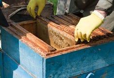 μέλισσες Στοκ Φωτογραφίες