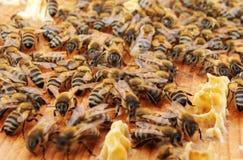 μέλισσες Στοκ φωτογραφίες με δικαίωμα ελεύθερης χρήσης