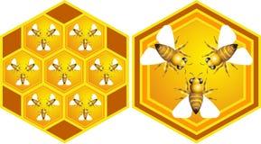 μέλισσες Στοκ Εικόνα