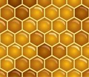 μέλι άνευ ραφής Στοκ Φωτογραφία
