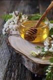 Μέλι ακακιών και ανθίζοντας ακακία στοκ φωτογραφίες με δικαίωμα ελεύθερης χρήσης