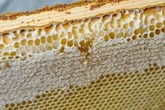 Μέλι, γλυκό μέλι, εύγευστο, μελισσοκομία, κηρήθρα, φυσικά προϊόντα Στοκ Εικόνα