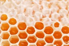 μέλι κίτρινο Στοκ Εικόνες