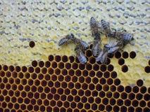 Μέλι και μέλισσες στοκ φωτογραφίες με δικαίωμα ελεύθερης χρήσης