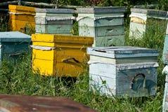 μέλι κυψελών μελισσών στοκ φωτογραφίες