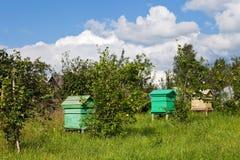 μέλι κυψελών μελισσών στοκ φωτογραφία με δικαίωμα ελεύθερης χρήσης