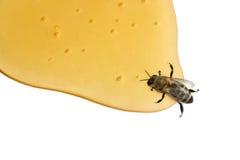 μέλι μελισσών Στοκ εικόνες με δικαίωμα ελεύθερης χρήσης