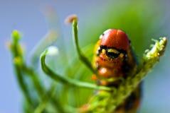 μέλλον εστίασης πεταλού&d Στοκ Εικόνες