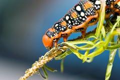 μέλλον πεταλούδων Στοκ Εικόνες