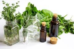 Μέντα, φασκομηλιά, δεντρολίβανο, θυμάρι - aromatherapy άσπρο υπόβαθρο Στοκ Εικόνες