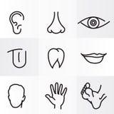 Μέρη ανθρώπινου σώματος Στοκ εικόνες με δικαίωμα ελεύθερης χρήσης