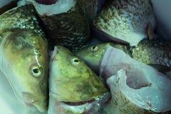 Μέρη κυπρίνων ψαριών στο κύπελλο Στοκ φωτογραφίες με δικαίωμα ελεύθερης χρήσης
