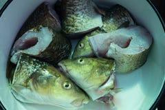 Μέρη κυπρίνων ψαριών στο κύπελλο Στοκ Φωτογραφία