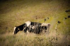 Μέρη παραδείσου στη Νέα Ζηλανδία Στοκ φωτογραφίες με δικαίωμα ελεύθερης χρήσης