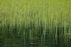 Μέρη των βεραμάν βιασυνών στο νερό λιμνών στοκ εικόνες