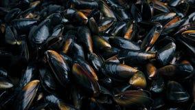 Μέρη των θαλασσινών μυδιών απόθεμα βίντεο