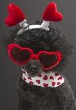 Μέρη των καρδιών σε ένα αστείο σκυλί Στοκ φωτογραφία με δικαίωμα ελεύθερης χρήσης