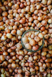 Μέρη των οργανικών χρυσών κρεμμυδιών βολβών στην αγορά Στοκ Εικόνες