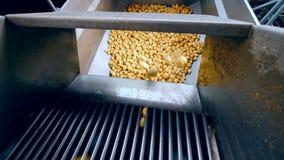 Μέρη των πατατών που παίρνουν στο μεγάλο εμπορευματοκιβώτιο σε εγκαταστάσεις τροφίμων απόθεμα βίντεο