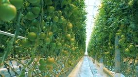 Μέρη των πράσινων λαχανικών φιλμ μικρού μήκους