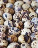 Αυγά ορτυκιών Στοκ εικόνες με δικαίωμα ελεύθερης χρήσης