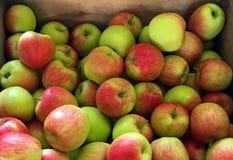 Μέρη των φρέσκων επιλεγμένων μήλων Στοκ Εικόνα
