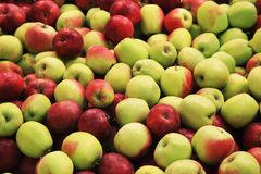Μέρη των φρέσκων μήλων Στοκ Εικόνες