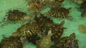 Μέρη των χελωνών που κολυμπούν σε μια τεχνητή λίμνη απόθεμα βίντεο