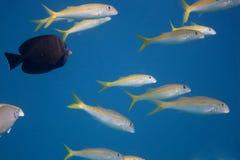 μέρη των ψαριών και των μπλε νερών Στοκ φωτογραφίες με δικαίωμα ελεύθερης χρήσης