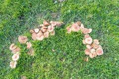 Μέρος ενός δαχτυλιδιού νεράιδων των μανιταριών Στοκ Φωτογραφίες