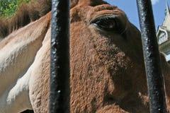 Μέρος ενός κεφαλιού του αλόγου σε ένα κλουβί Στοκ φωτογραφίες με δικαίωμα ελεύθερης χρήσης