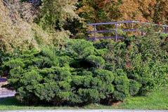 Μέρος ενός όμορφου κήπου με τις διακοσμητικές εγκαταστάσεις και τα κιγκλιδώματα σιδήρου στοκ φωτογραφία με δικαίωμα ελεύθερης χρήσης
