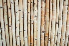 Μέρος κούτσουρων σημύδων Στοκ εικόνα με δικαίωμα ελεύθερης χρήσης