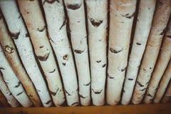 Μέρος κούτσουρων σημύδων Στοκ Εικόνα